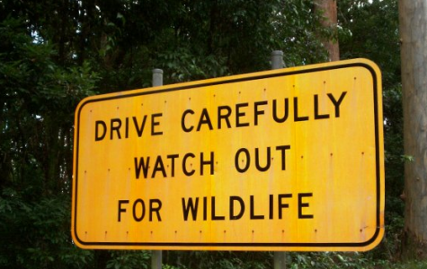 The National Wildlife Federation announces support for a proposed wildlife crossing