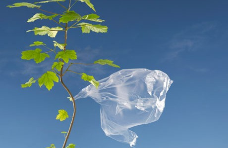 City of Los Angeles bans the sale of single-use plastic bags