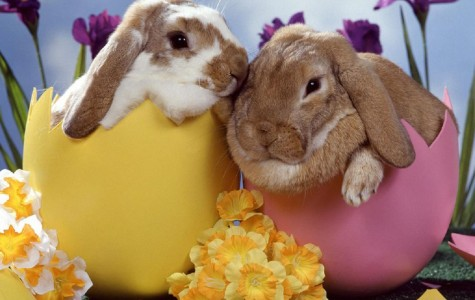 A Fluffy Tale: the history of the Easter Bunny