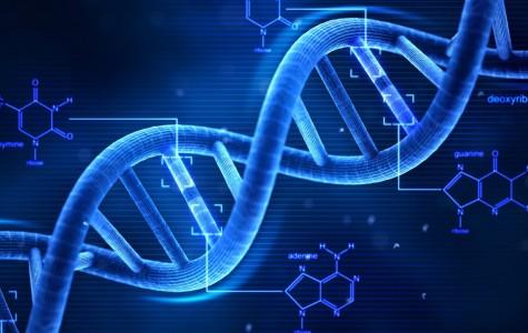 Bioengineers test implantable technology